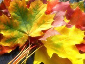 autumn_2_4_1024x768